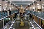 Musée d'Histoire naturelle Lille