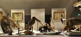 Musée D'Allard Montbrison