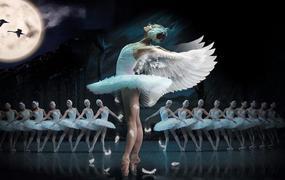 Spectacle Le Lac Des Cygnes - Ballet & Orch