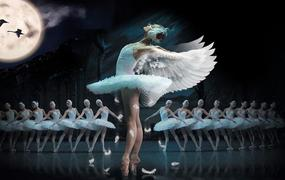 Spectacle Le Lac Des Cygnes - Ballet & Orch - Le Lac Des Cygnes