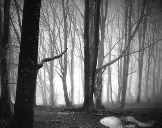 15 jours - 15 photographies Forêts Pyrénéennes de Bruno Blais