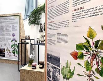 Histoires de plantes, les usages d'antan à Grand Lieu