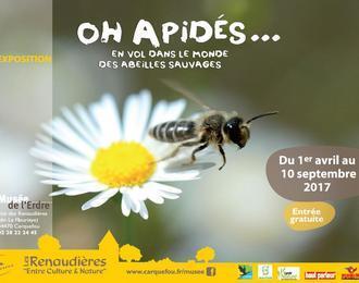 Oh apidés... En vol dans le monde des abeilles sauvages
