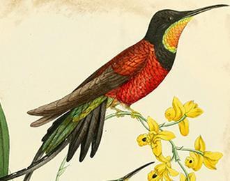 Portraits d'oiseaux - Bernard Fort
