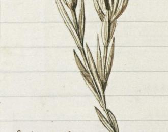 Rendez Vous Aux Musées ! En Fleur ! Histoire Et Géographie De Plantes À Floraison Tardive