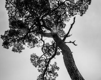 Stéphan Photographe Castelginest