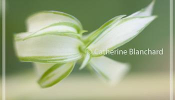 Catherine Blanchard