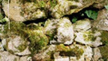 Quand les pierres parlent