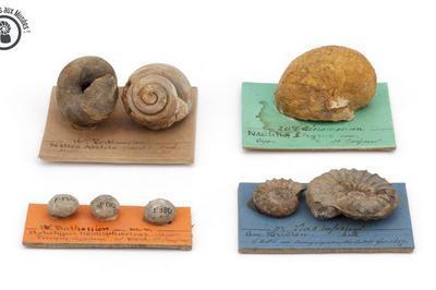 Rendez vous aux musées ! Bonjour les fossiles ! à Lons le Saunier