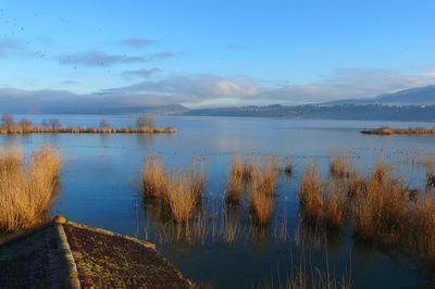 A La Découverte Des Oiseaux Du Lac à Le Bourget du Lac