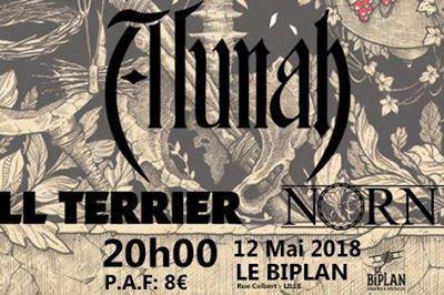 Alunah - Bull Terrier - Nornes à Lille