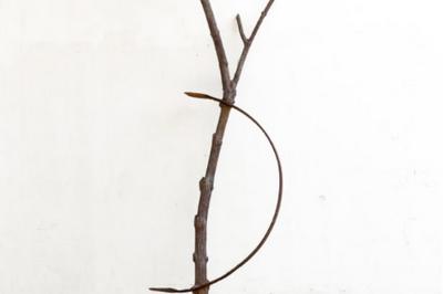 « Arte Povera, quand les attitudes deviennent forme » par Marina Versaggi Panno à Nice