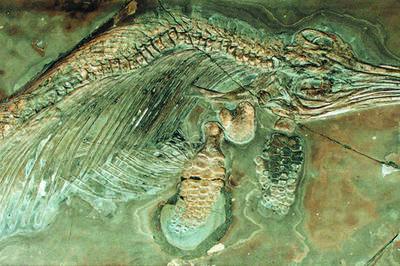 Collection De Paléontologie à Paris 5ème