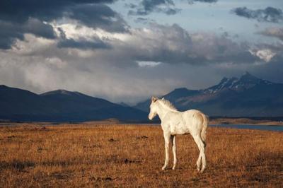 Connaissance du Monde : Patagonie, à la lisière du monde à Munster
