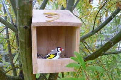 Construction d'une mangeoire à oiseaux à Braud et saint Louis
