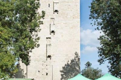 Découverte D'un Donjon Médiéval à Lesparre Medoc