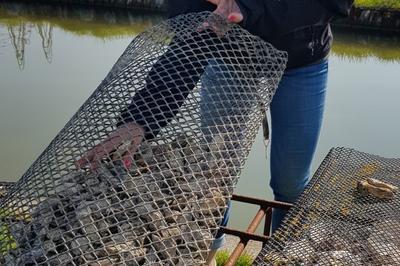 Découverte De L'ostréiculture De Charente-maritime à Port des Barques