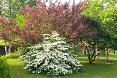 Découverte Du Patrimoine Naturel Et Botanique De Lorraine à Lay saint Christophe
