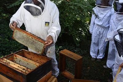 Découvrir L'apiculture Urbaine. Atelier-rencontre Avec L'apiculteur Du Château De La Muette à Paris 16ème