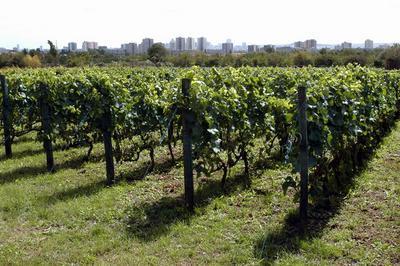 Dimanches du Patrimoine / Argenteuil agricole : les Coteaux