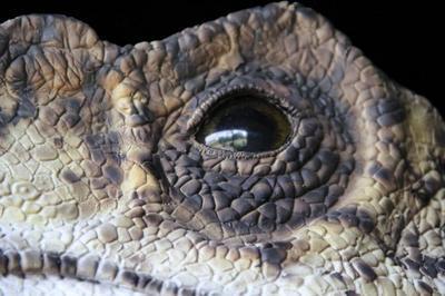 Dinosaures à Saint Cesaire