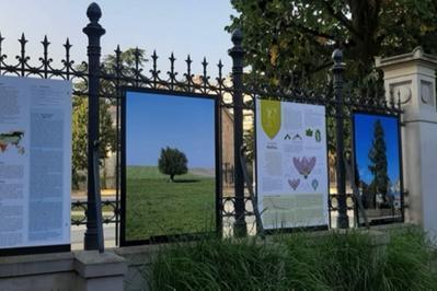 Exposition « Abracadabra » Et «arbres Remarquables Du Bas-rhin» à Strasbourg