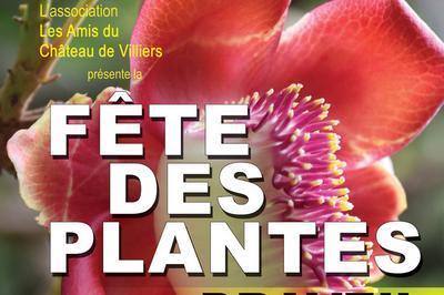 Fête Des Plantes à Draveil