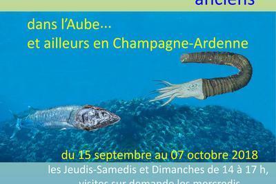 Fossiles Et Paysages Anciens Dans L'aube Et Ailleurs En Champagne-ardenne à Romilly sur Seine