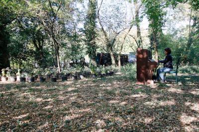 Guillaume Barth, Une Nouvelle Forêt à Lyon