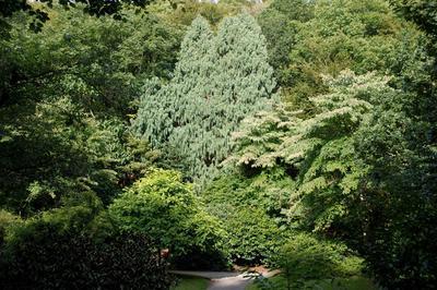 Histoires D'arbres Remarquables à Brest
