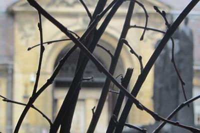Installation Plastique : Dans Ma Forêt Profonde. à Reims