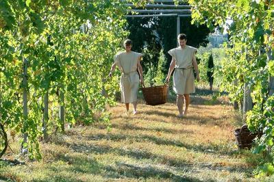 Jardin Et Vignoble Romains Reconstitués à Beaucaire