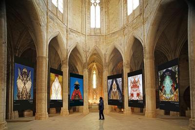 L'abbaye De Valmagne Expose Nature Divinity à Villeveyrac