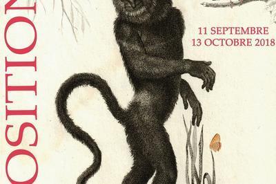 L'illustration Zoologique à Travers Les Collections De La Médiathèque à Hyeres