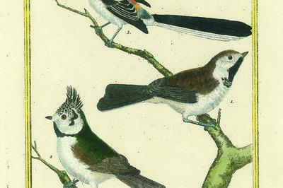 « Observation Des Oiseaux » à Montbard