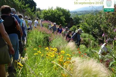 Le Grand Pique-nique : Venez Savourer Votre Parc Du Luberon Au Jardin Des Plantes Tinctoriales De Lauris !
