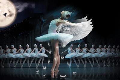 Le Lac Des Cygnes - Ballet Et Orchestre à Saint Brieuc