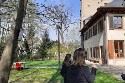 Les Pépites Du Parc Naturel Urbain Ill Bruche Entre Koenigshoffen Et La Montagne Verte à Strasbourg