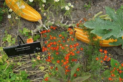 Les Potagers Du Monde: Rencontre Avec Un Jardinier. à Toulouse