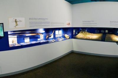 Musée De Préhistoire De Solutré à Solutre Pouilly