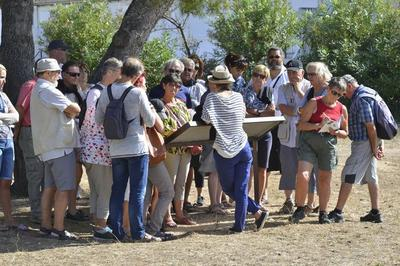 Olbia, Une Forteresse Grecque à Hyeres
