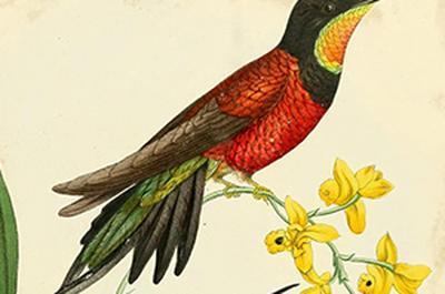 Portraits d'oiseaux - Bernard Fort à Barraux