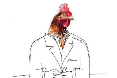Pourquoi les poules préfèrent être élevées en batterie à Surgeres