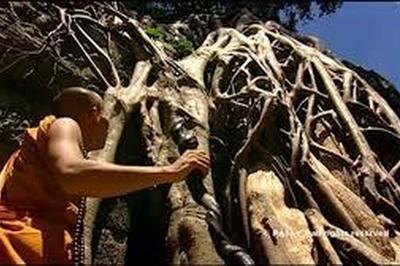 Projection Du Documentaire L'arbre Et Les Fleuves De Dominique Pipat (france 5) à Pierre Perthuis