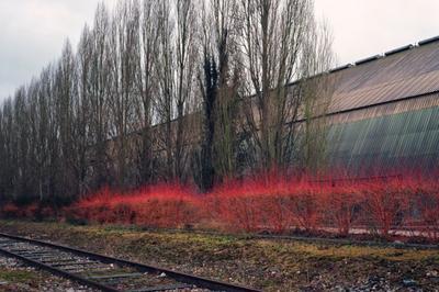 Peak Oil, projet photographique sur le paysage industriel à Sotteville les Rouen