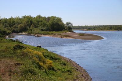Sortie Nature Découverte De La Réserve Naturelle Du Val De Loire Bourbonnais. à Garnat sur Engievre