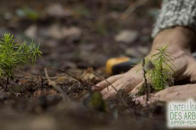 Terre ! Le rendez-vous écologie - Spécial Arbres à Lyon