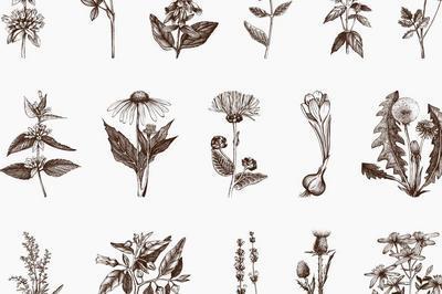 Trois plantes à sortilèges qu'Ulysse goûta chez Circé à Neuilly sur Seine