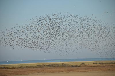 Une Heure Avec Les Oiseaux De La Baie D'yves à Yves