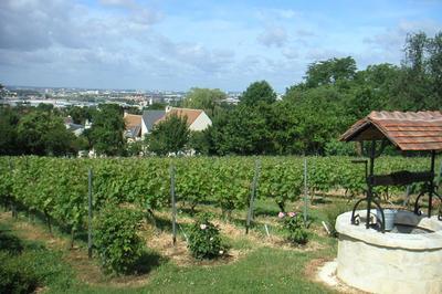 Vignes De Sucy à Sucy en Brie
